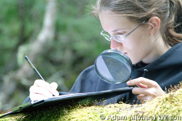 UNT student Rebecca Wilson studying the miniature forests of Cape Horn. (Photo by Adam Wilson)