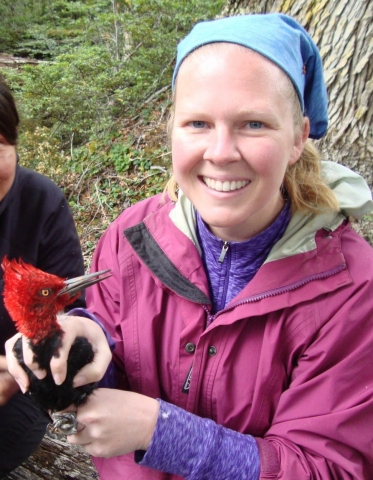 Amy Wynia holding a male Magellanic Woodpecker on Navarino Island, Chile, February 2015.  Photo by Natalia Jordan